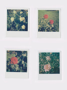 Antistress - Rose - 4 Polaroid ( Impossible 600 color ) - 2016