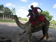 Camel Riding at Dar Zoo-Kigamboni
