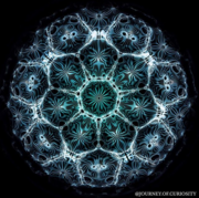 7 fold Cymatics Photo
