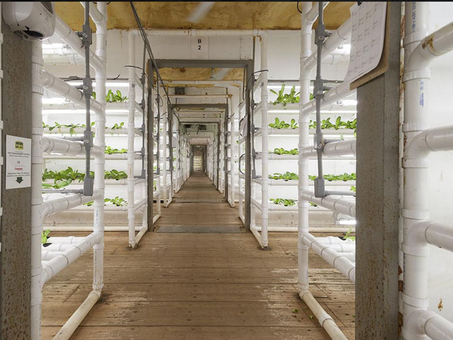 Making your Own Urban Farm out of Shipping Container - HOMEGROWN