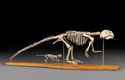 Skinner Science, Technology and Clocks Auction to Feature Important English Fossils