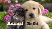Certified Traditional Animal Reiki Training - Level One