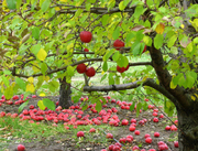 Stories in the Orchard II