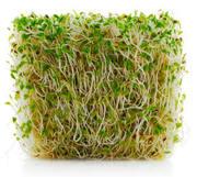 Skillshare: Sprouting and Microgreens