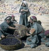 People, Lives and Landscapes, 1898-1934: Images from the Land of the Bible