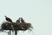 Live Bird Show
