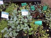 Plant Sale: Hearty Late Season Crops