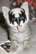 kiss-kitty