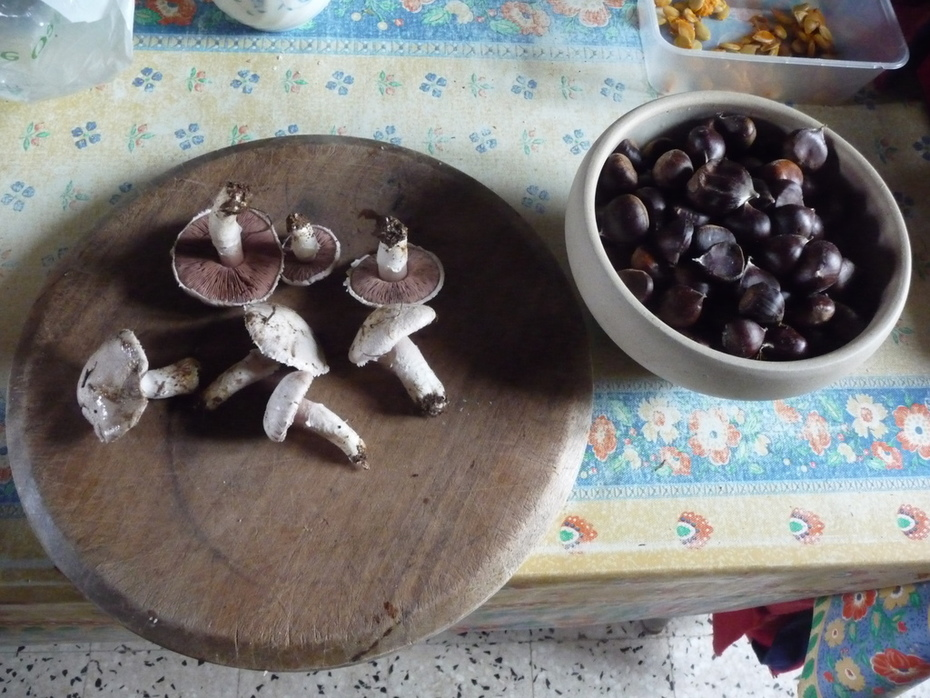Mushrooms and chestnuts - autumn at Amida France