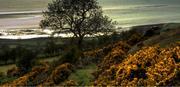 Serene Hillside