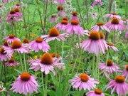 Intro to Medicinal Herbs