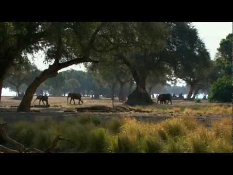 Natural World BBC HD 720p
