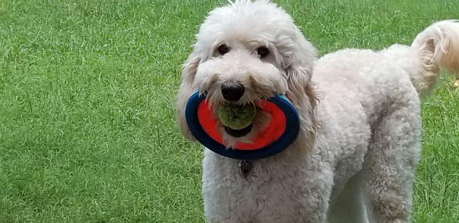 Ellie + frisbee