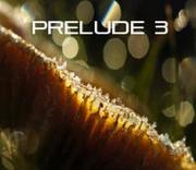 Prelude 3.