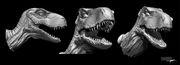 Dinosaur [Siamotyrannus isanensis]