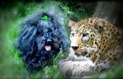 Commander Ralph with Amur Leopard