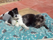 Alfie & Tilly