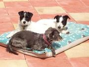 Tilly, Alfie & Penny