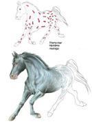 hästbild