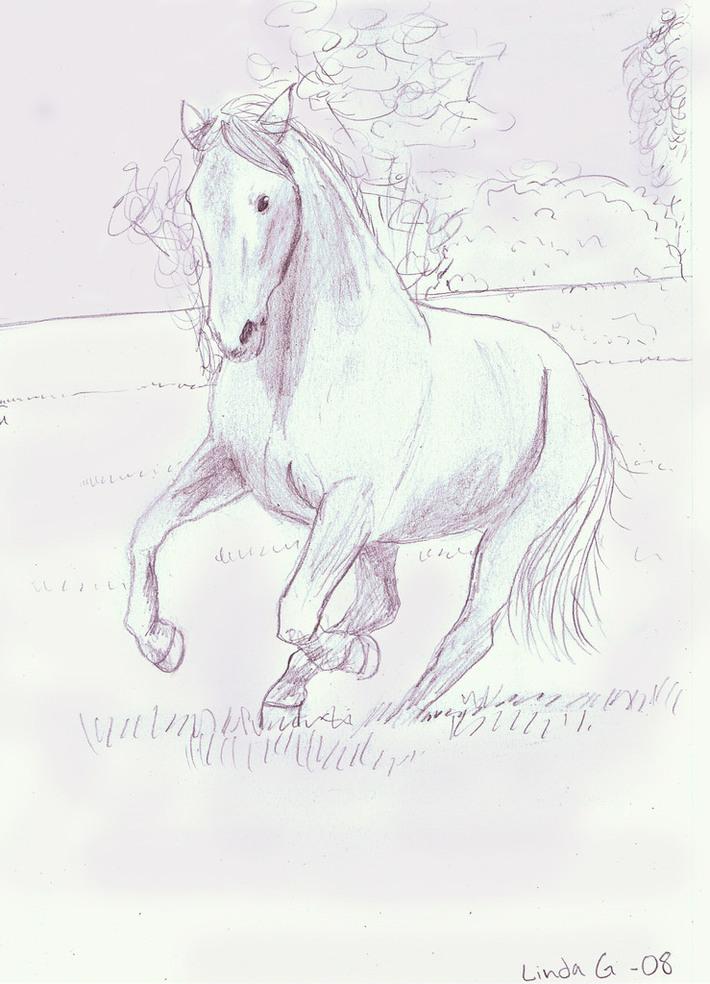 skiss - häst