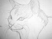 Katt ^^