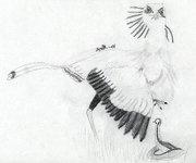 Sekreterarfågel