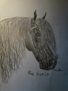 Frieser Häst