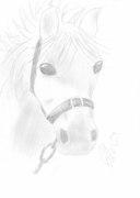 Häst med grimma