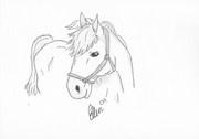 Rita hästar