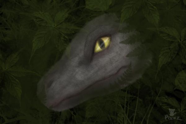 Raptor in Shadows