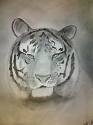 Tiger!!