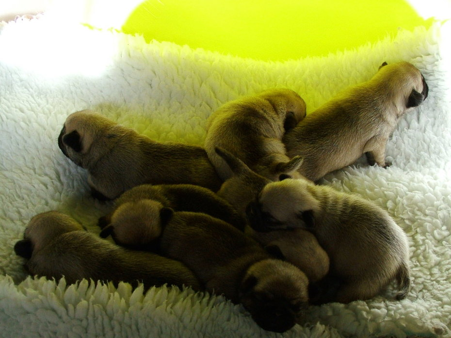 15days old 013-1