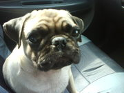 on d way back from vet