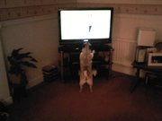 miley watchin crufts