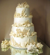 cake coral_reef