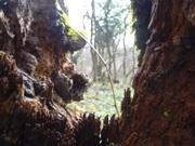 Enchanted Wood at La Ville au Roi (Eleusis)