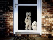 Ticker and Lucky At The Front Door.