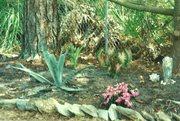 Mother's Garden in Backyard.