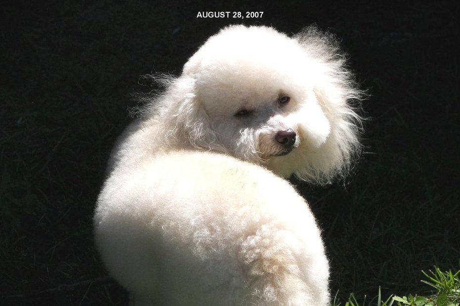 My Precious Pup Pierre