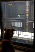 """""""Dog Sees Cat Across The Way"""""""
