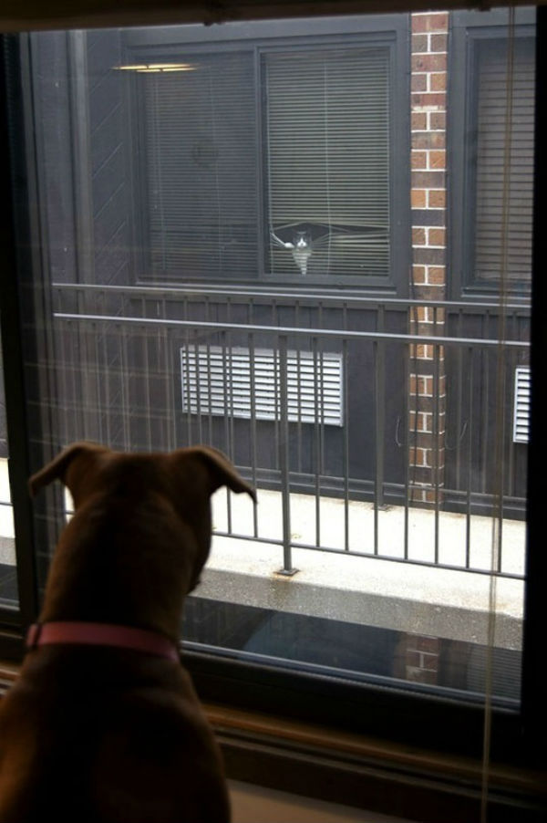 """Dog Sees Cat Across The Way"""