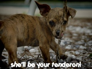 tenderpuppy