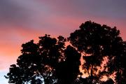 Dawn in the Rainforest