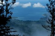 Birds Eye View of Rainforest