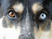 Kyra's Eyes