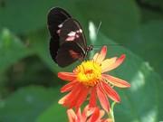 Butterfly Lands on a Flower