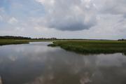 South Carolina Low Country Swamp