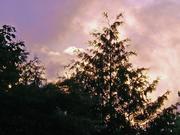 Eden Sunset