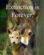 extinctionisforeveropt29xs