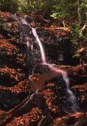 falls Log Hollow Br0001